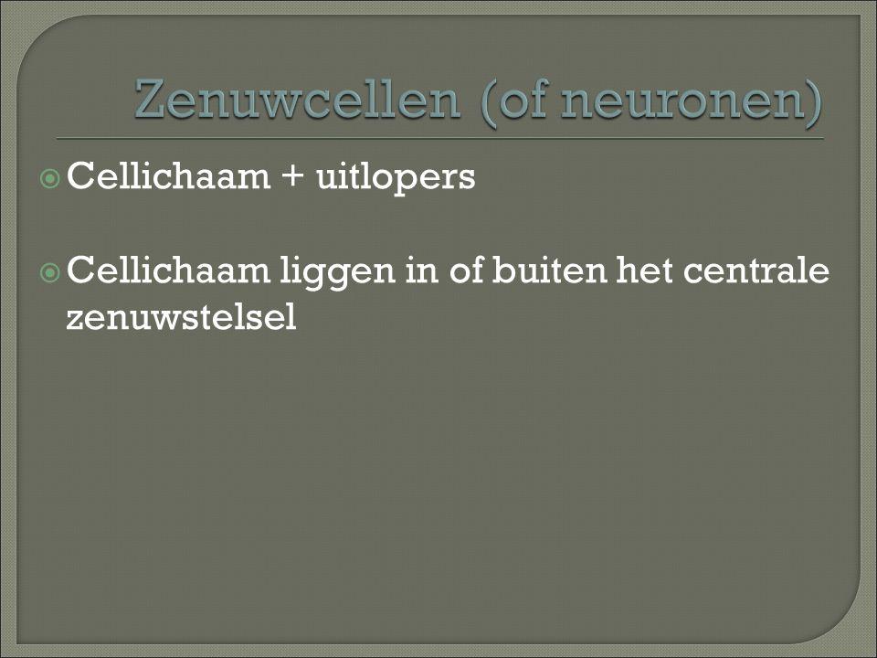 Zenuwcellen (of neuronen)