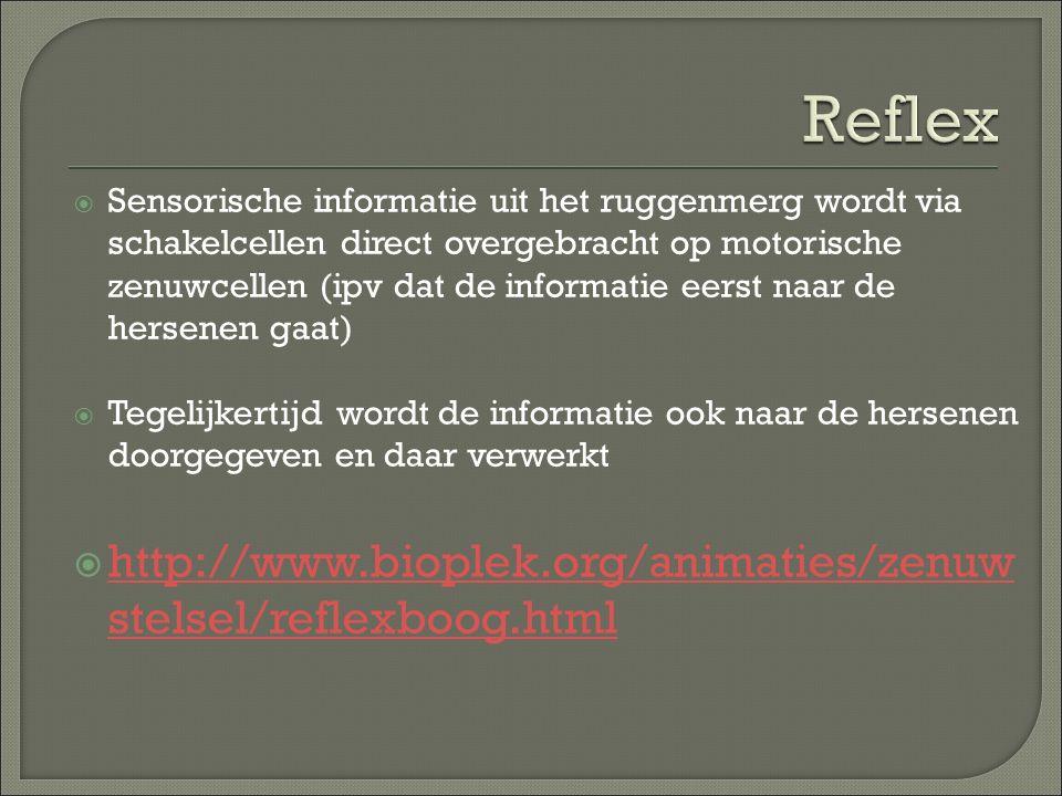 Reflex http://www.bioplek.org/animaties/zenuwstelsel/reflexboog.html