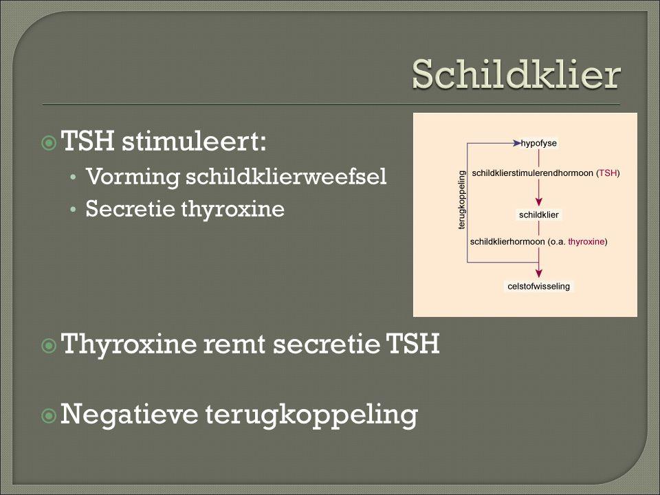 Schildklier TSH stimuleert: Thyroxine remt secretie TSH