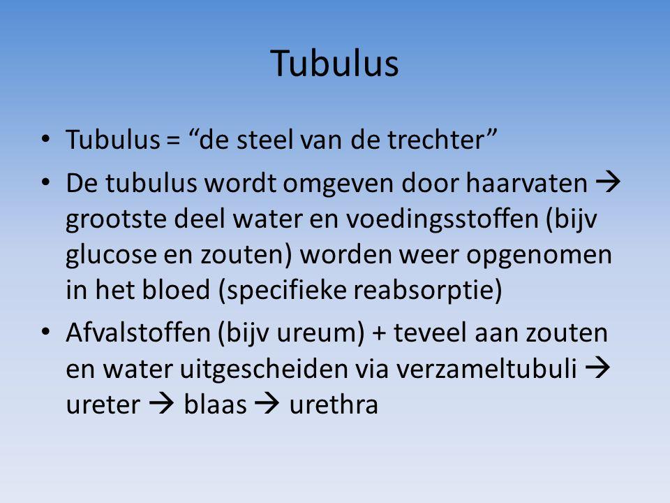 Tubulus Tubulus = de steel van de trechter