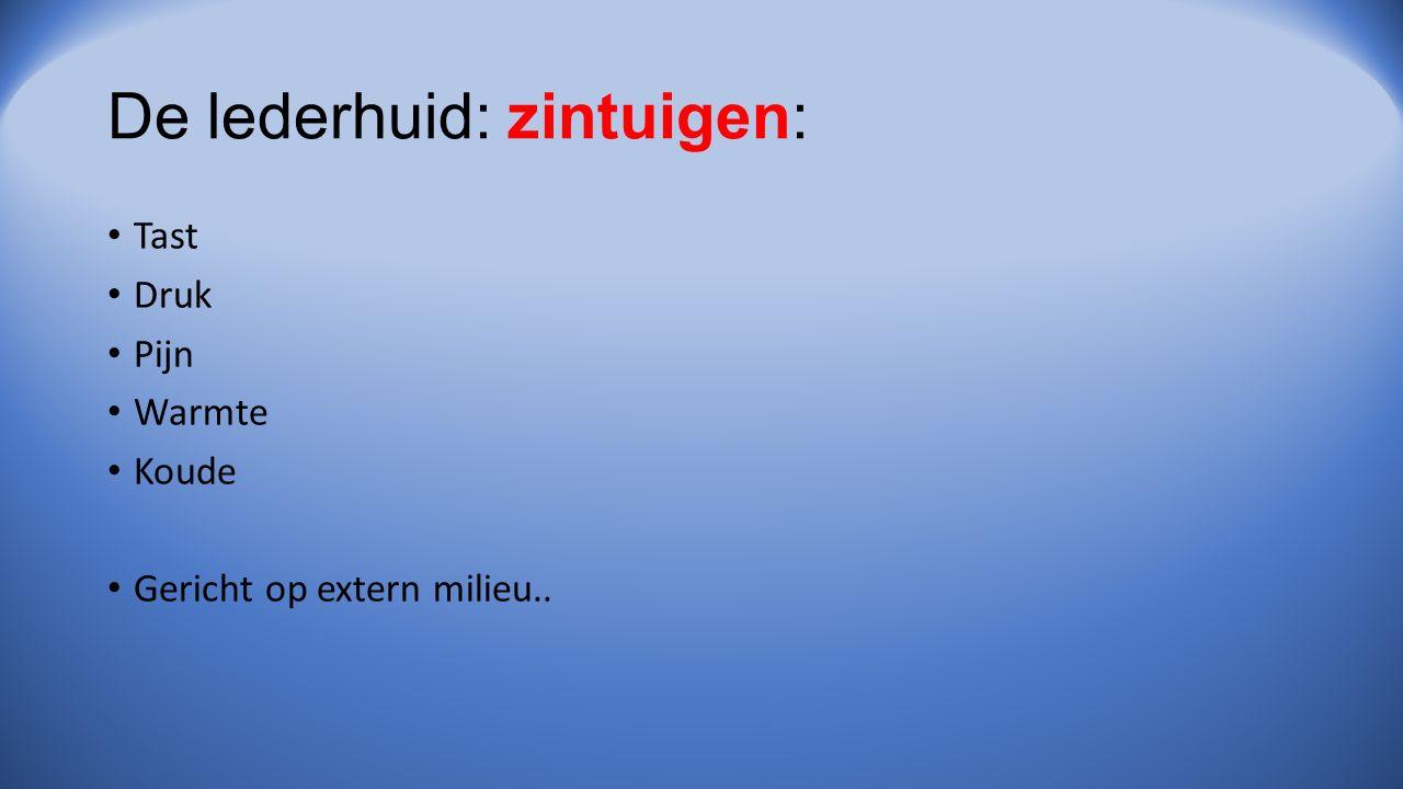 De lederhuid: zintuigen: