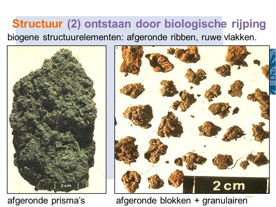 Structuur (2) ontstaan door biologische rijping