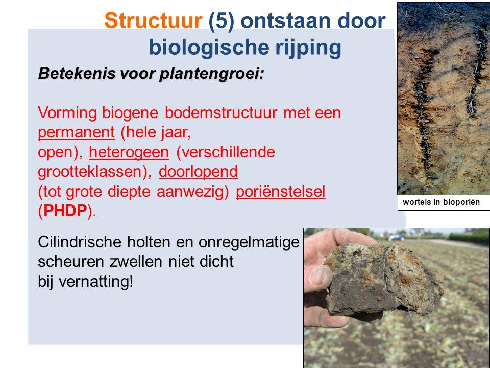 Structuur (5) ontstaan door biologische rijping