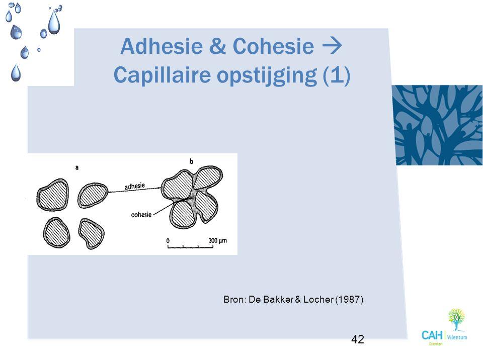 Adhesie & Cohesie  Capillaire opstijging (1)