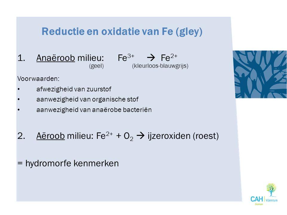 Reductie en oxidatie van Fe (gley)