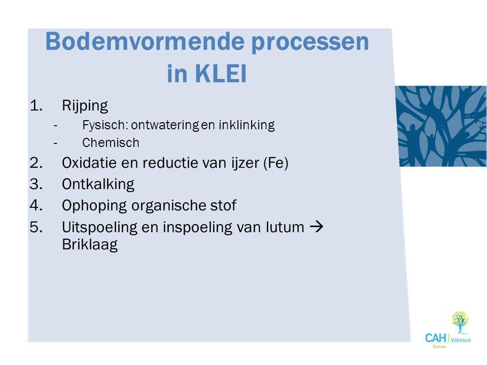Bodemvormende processen in KLEI