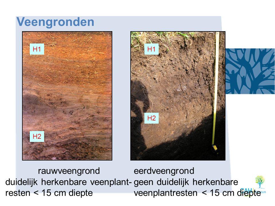 Veengronden rauwveengrond duidelijk herkenbare veenplant-