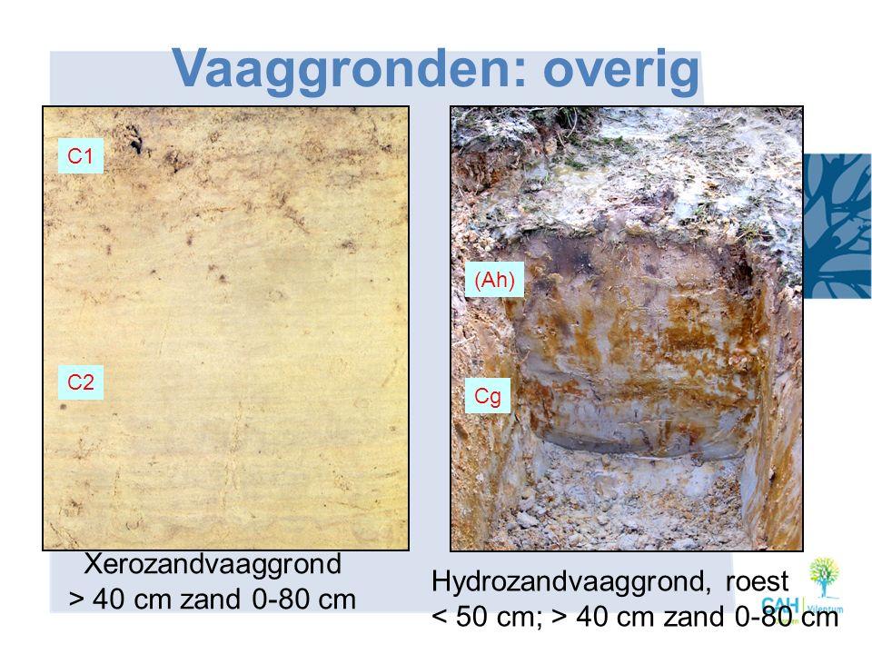 Vaaggronden: overig Xerozandvaaggrond > 40 cm zand 0-80 cm