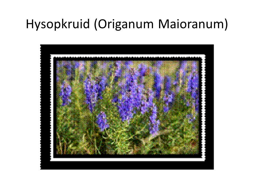 Hysopkruid (Origanum Maioranum)