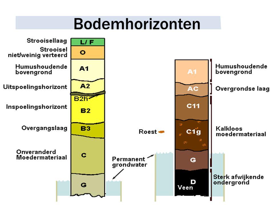 Bodemhorizonten