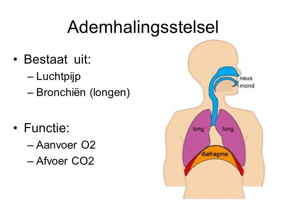 Ademhalingsstelsel Bestaat uit: Functie: Luchtpijp Bronchiën (longen)