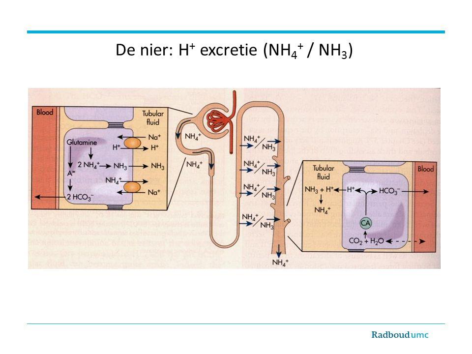 De nier: H+ excretie (NH4+ / NH3)