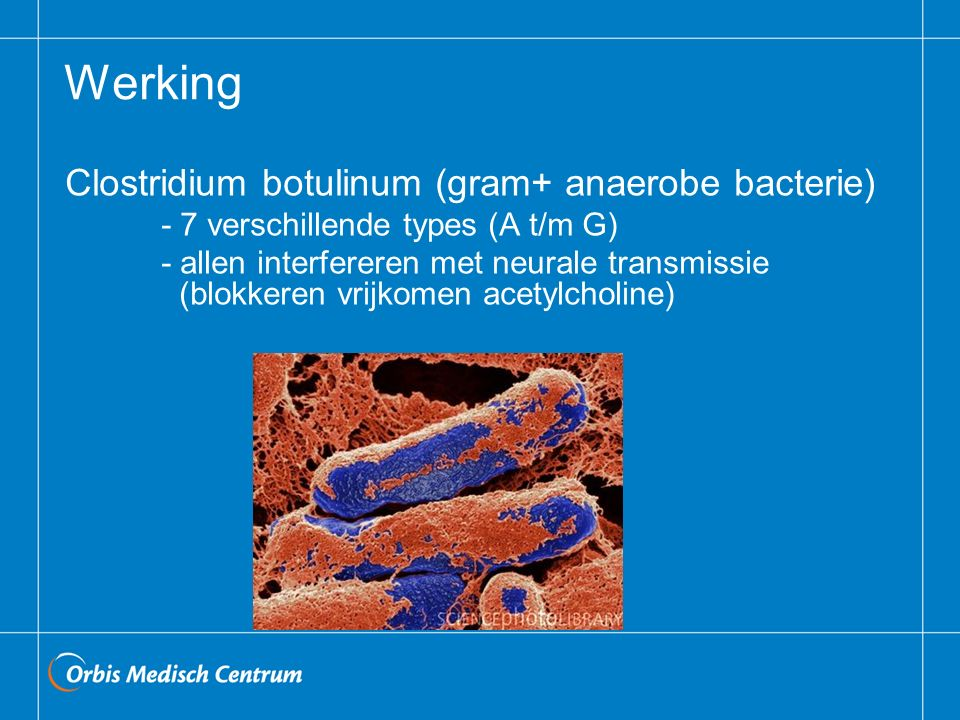 Werking Clostridium botulinum (gram+ anaerobe bacterie)