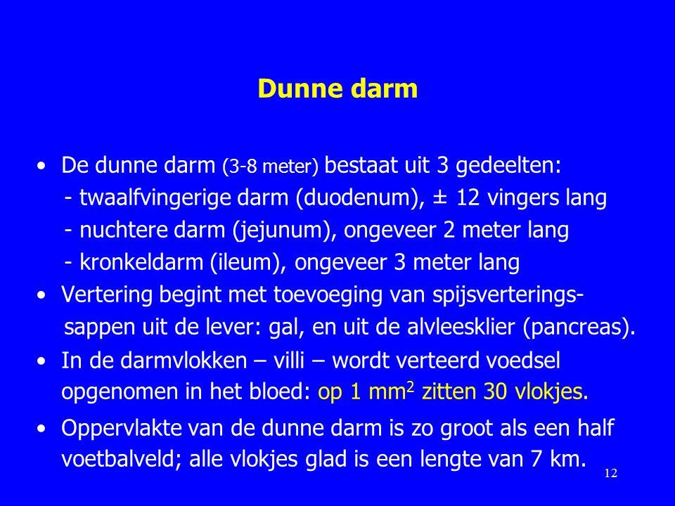 Dunne darm De dunne darm (3-8 meter) bestaat uit 3 gedeelten: