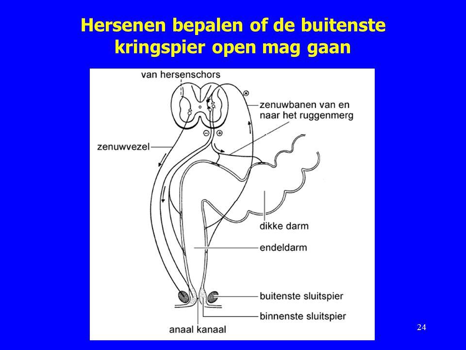 Hersenen bepalen of de buitenste kringspier open mag gaan