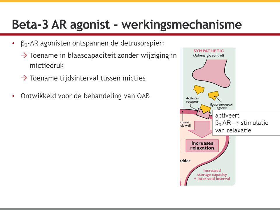 Beta-3 AR agonist – werkingsmechanisme