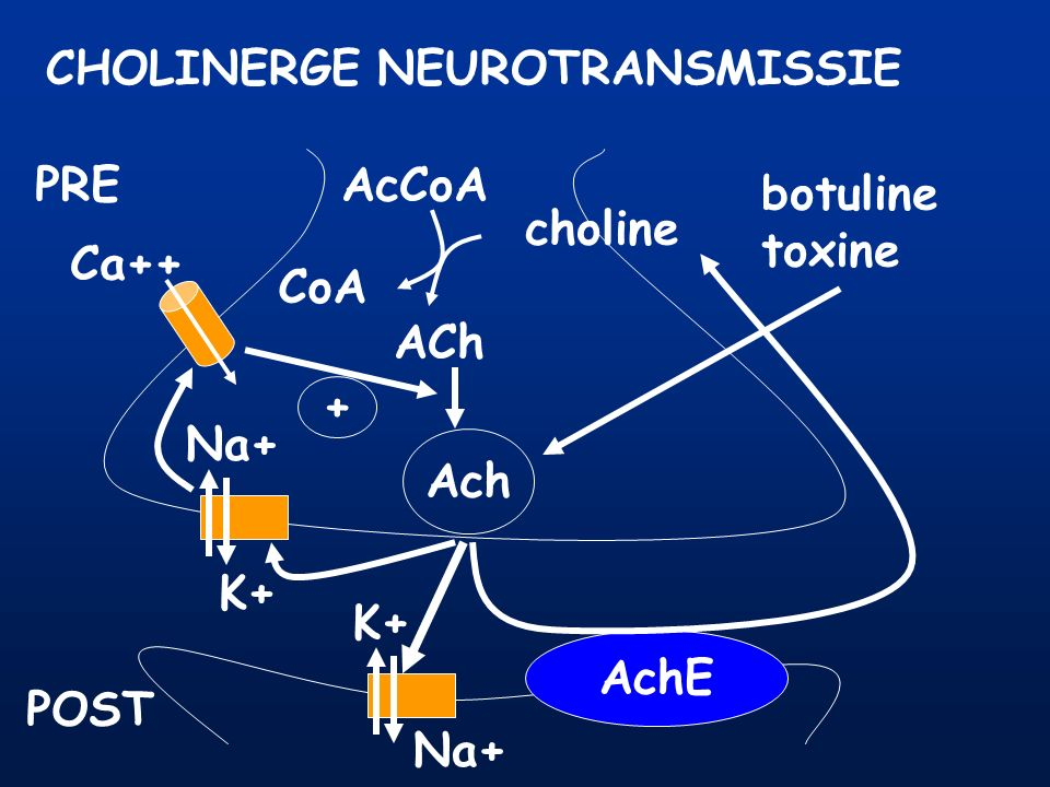 CHOLINERGE NEUROTRANSMISSIE