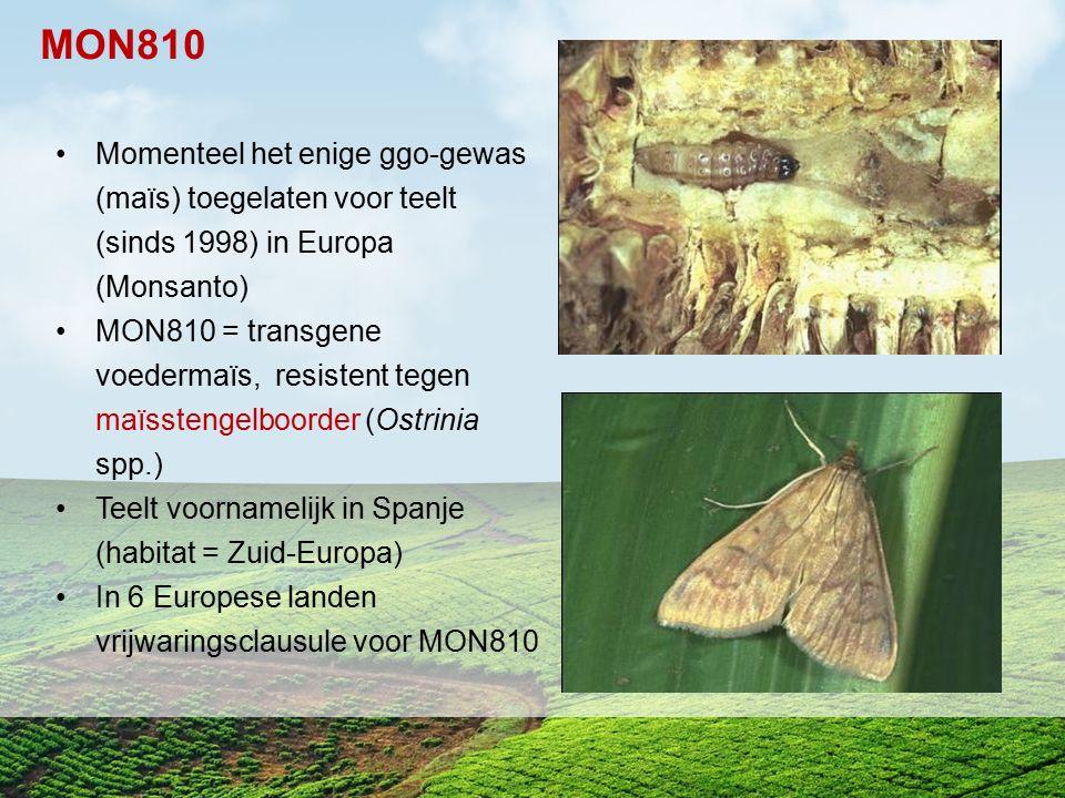 MON810 Momenteel het enige ggo-gewas (maïs) toegelaten voor teelt (sinds 1998) in Europa (Monsanto)