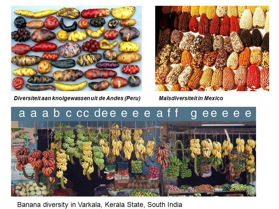 Banana diversity in Varkala, Kerala State, South India