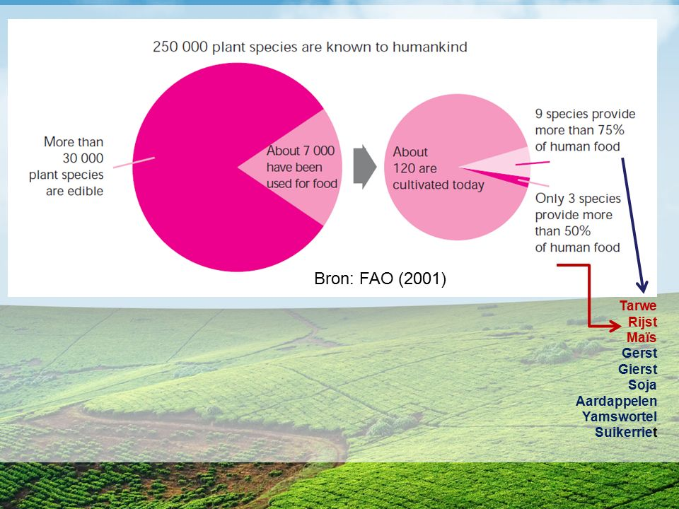 Bron: FAO (2001) Tarwe Rijst Maïs Gerst Gierst Soja Aardappelen