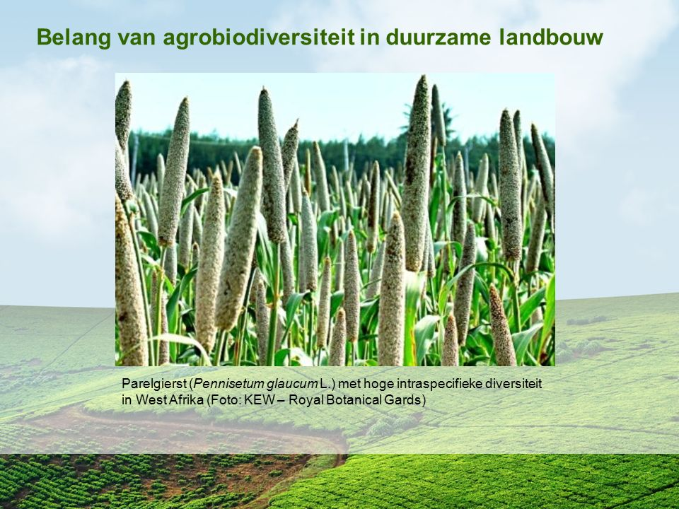 Belang van agrobiodiversiteit in duurzame landbouw