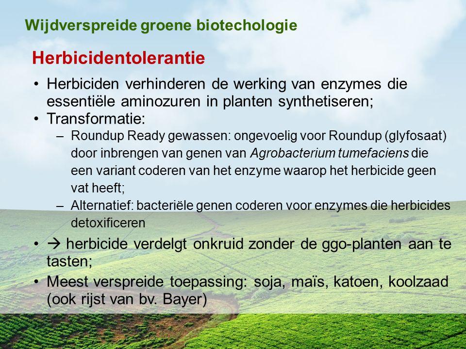 Herbicidentolerantie