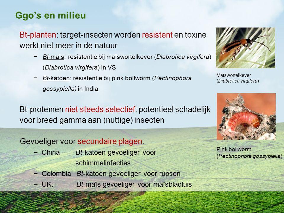 Ggo's en milieu Bt-planten: target-insecten worden resistent en toxine werkt niet meer in de natuur.
