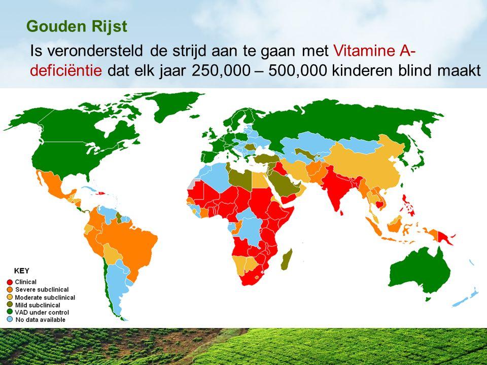Gouden Rijst Is verondersteld de strijd aan te gaan met Vitamine A-deficiëntie dat elk jaar 250,000 – 500,000 kinderen blind maakt.