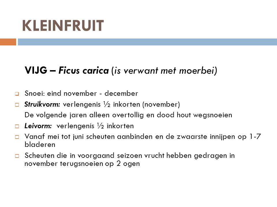 KLEINFRUIT VIJG – Ficus carica (is verwant met moerbei)