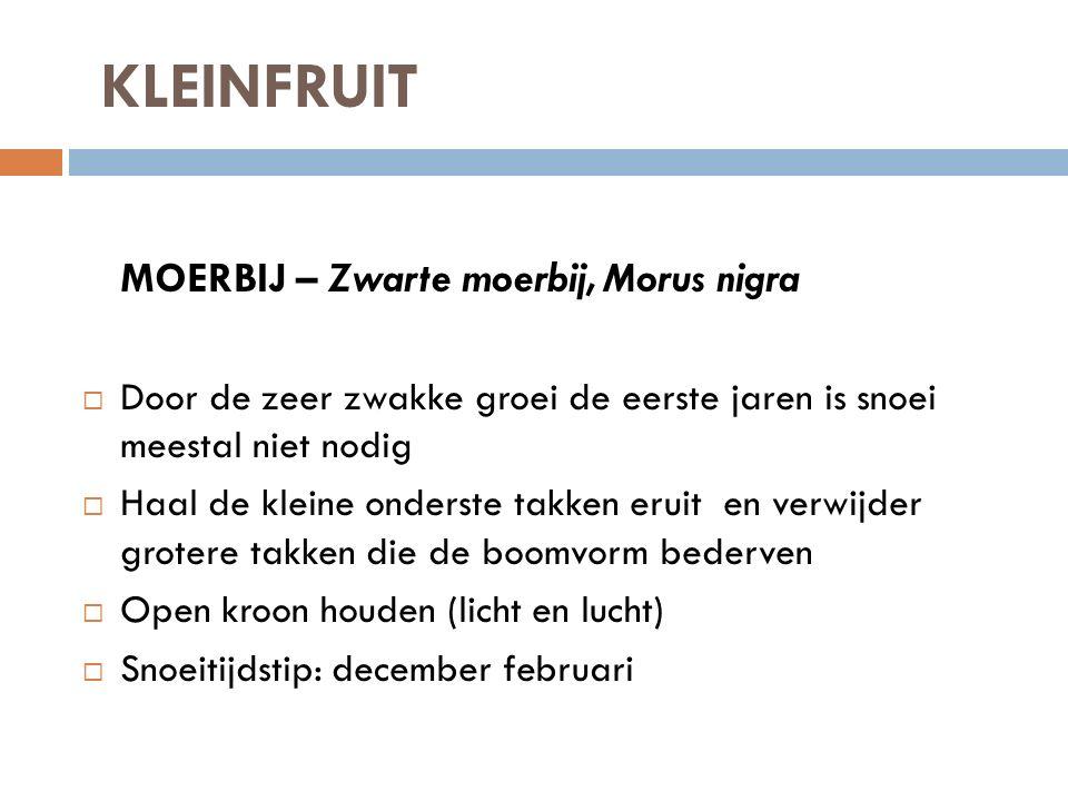 KLEINFRUIT MOERBIJ – Zwarte moerbij, Morus nigra