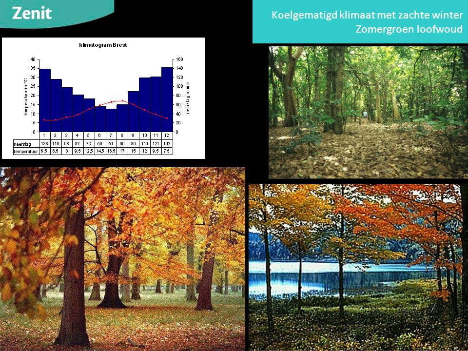 Koelgematigd klimaat met zachte winter Zomergroen loofwoud