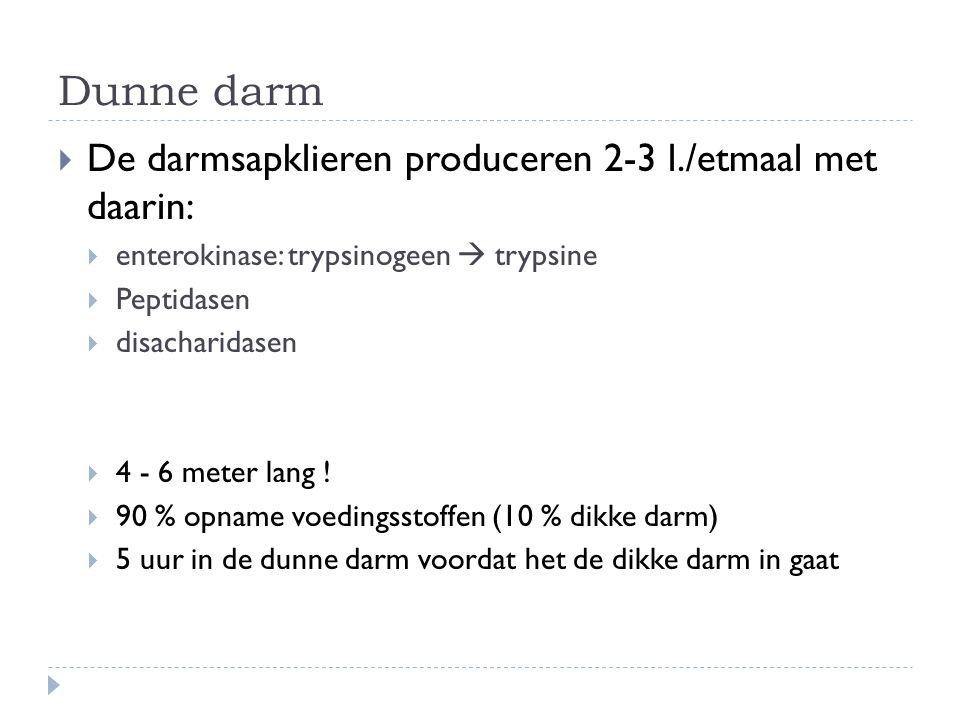 Dunne darm De darmsapklieren produceren 2-3 l./etmaal met daarin:
