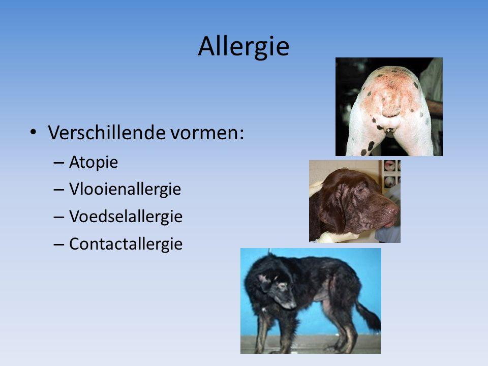 Allergie Verschillende vormen: Atopie Vlooienallergie Voedselallergie