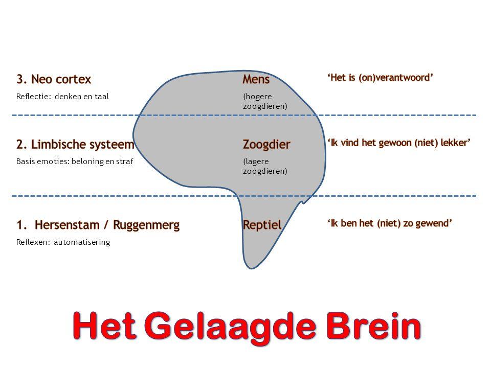 Het Gelaagde Brein 3. Neo cortex Mens 2. Limbische systeem Zoogdier