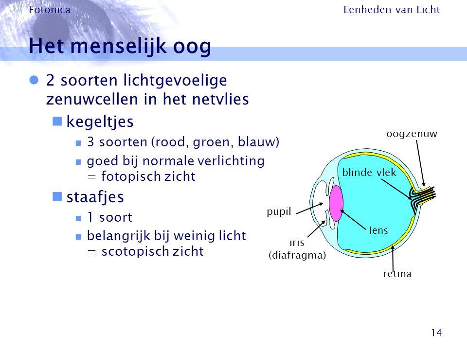 Het menselijk oog 2 soorten lichtgevoelige zenuwcellen in het netvlies