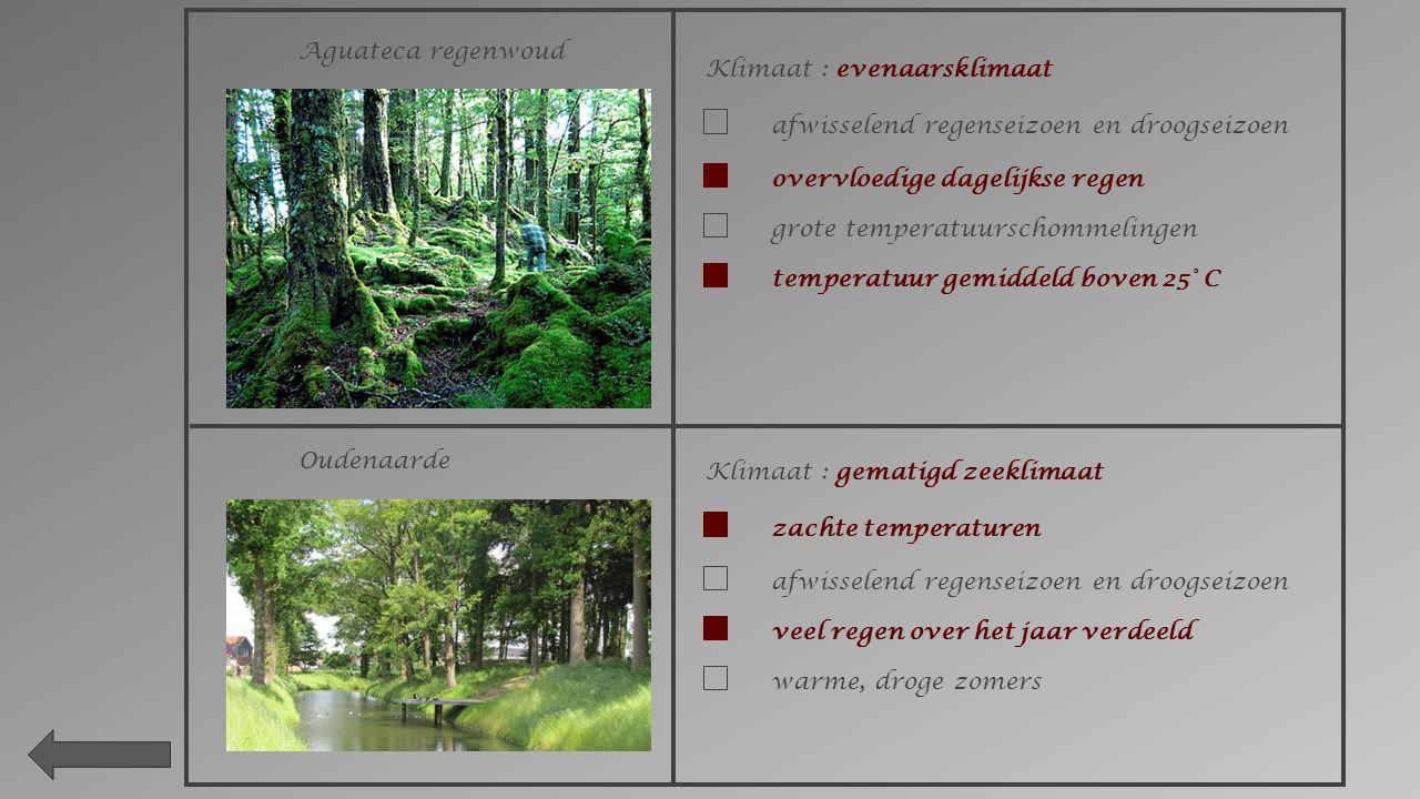Aguateca regenwoud Klimaat : evenaarsklimaat. afwisselend regenseizoen en droogseizoen. overvloedige dagelijkse regen.