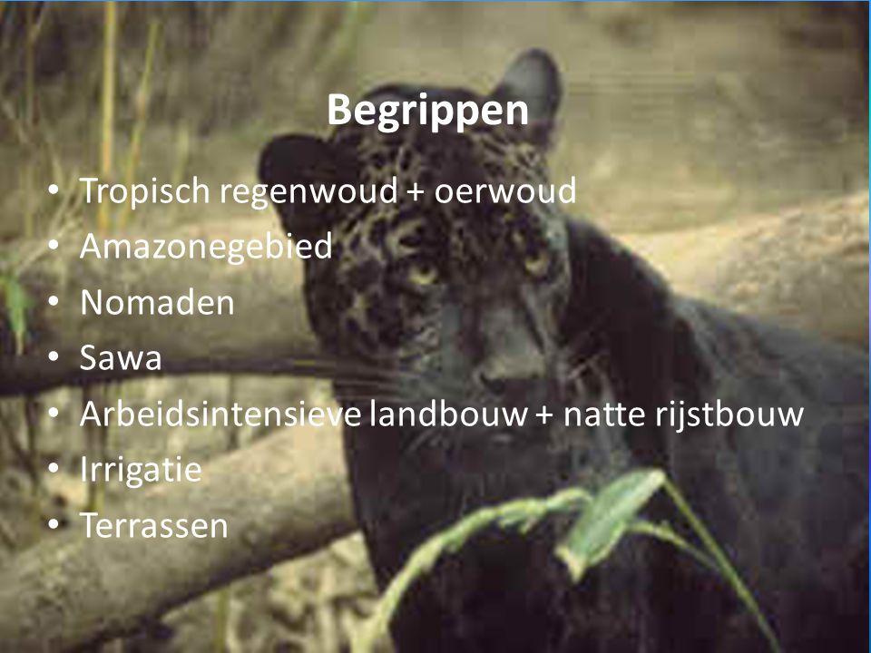 Begrippen Tropisch regenwoud + oerwoud Amazonegebied Nomaden Sawa