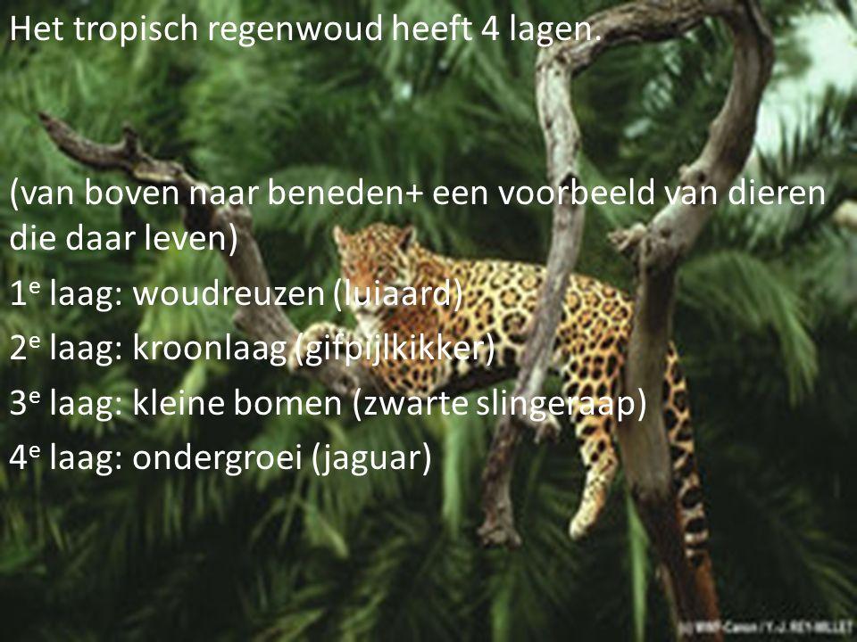 Het tropisch regenwoud heeft 4 lagen