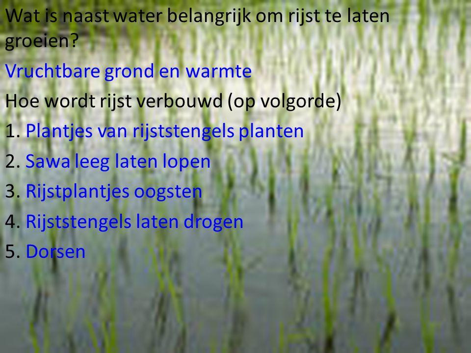 Wat is naast water belangrijk om rijst te laten groeien
