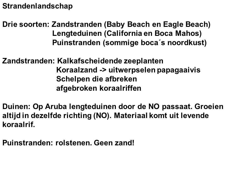 Strandenlandschap Drie soorten: Zandstranden (Baby Beach en Eagle Beach) Lengteduinen (California en Boca Mahos)