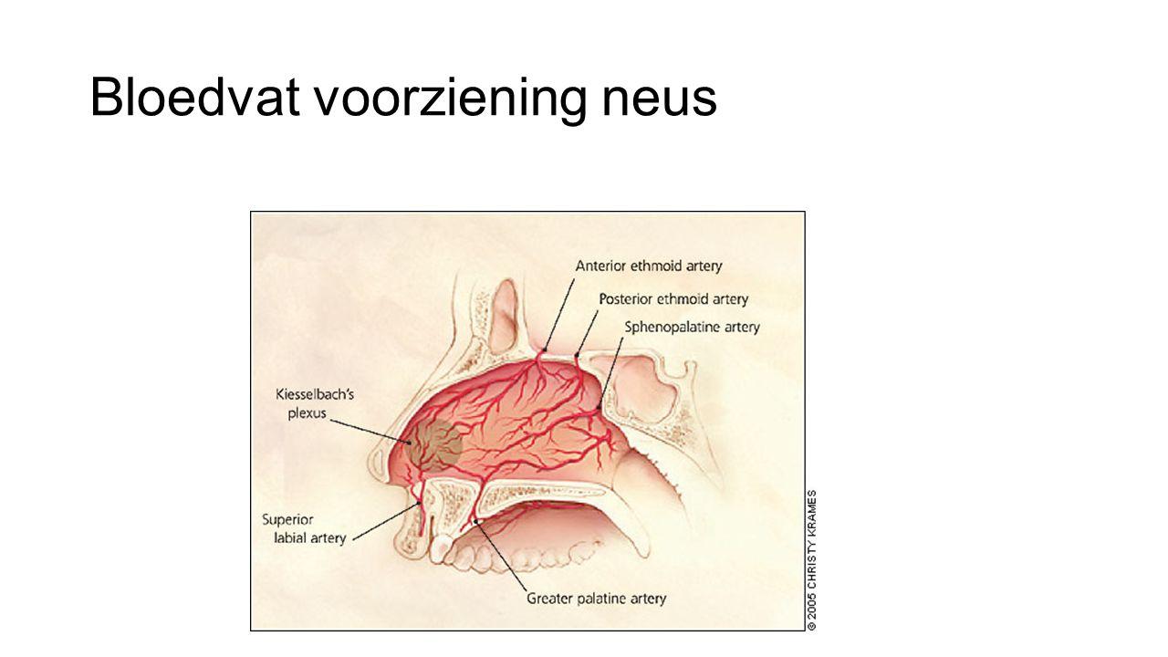 Bloedvat voorziening neus