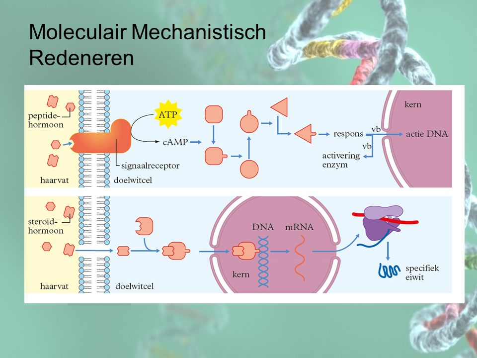 Moleculair Mechanistisch Redeneren