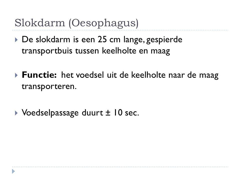 Slokdarm (Oesophagus)