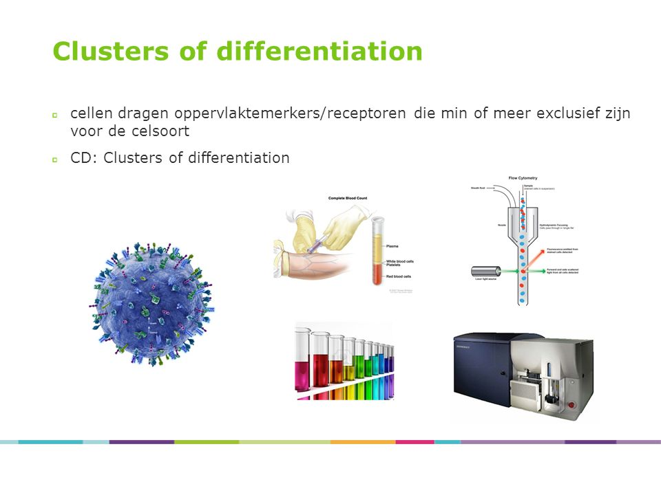 Clusters of differentiation