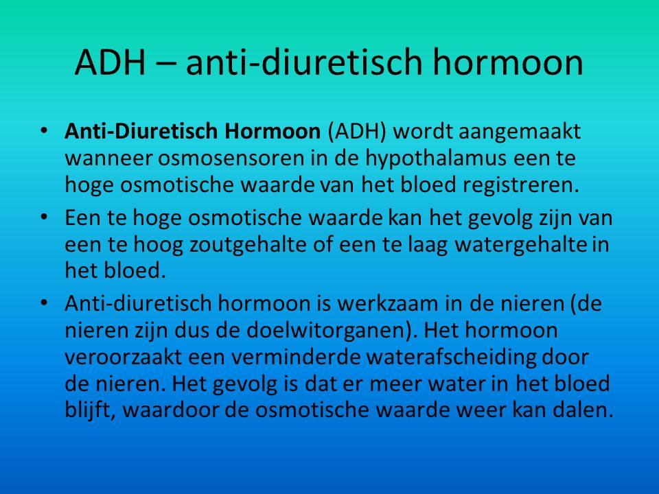 ADH – anti-diuretisch hormoon