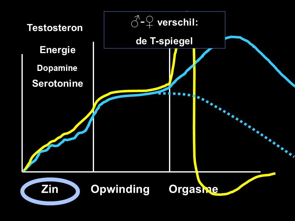 ♂-♀ verschil: Zin Opwinding Orgasme Testosteron de T-spiegel Energie