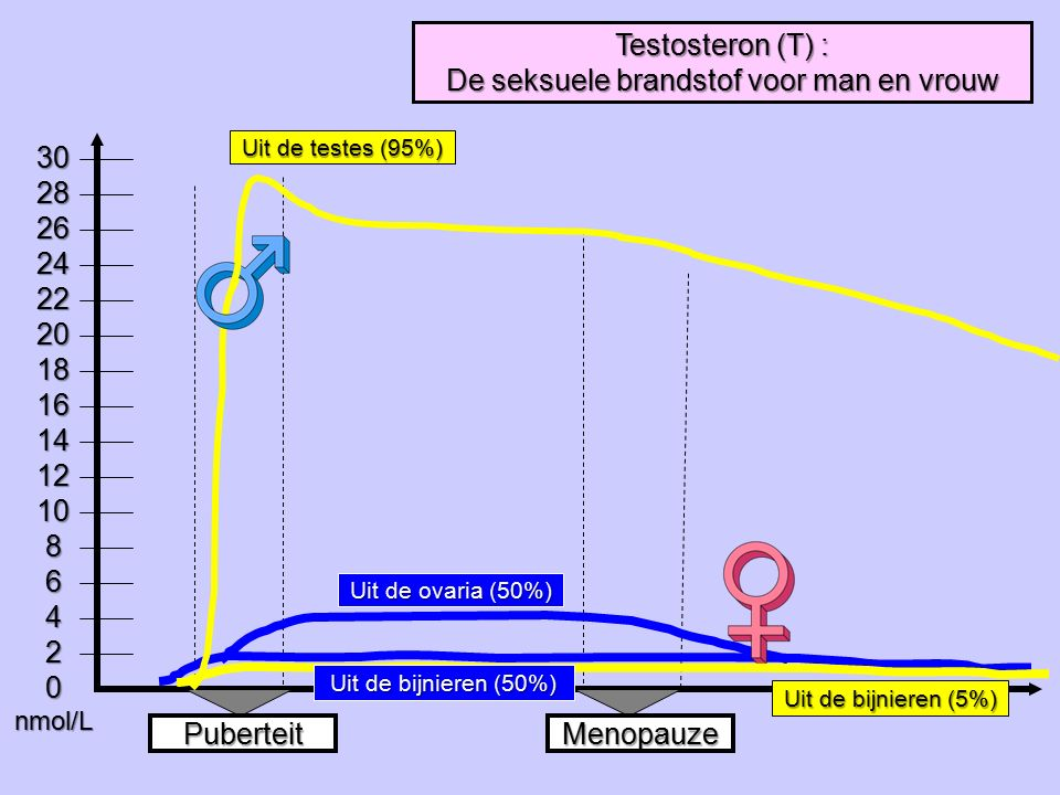 Testosteron (T) : De seksuele brandstof voor man en vrouw