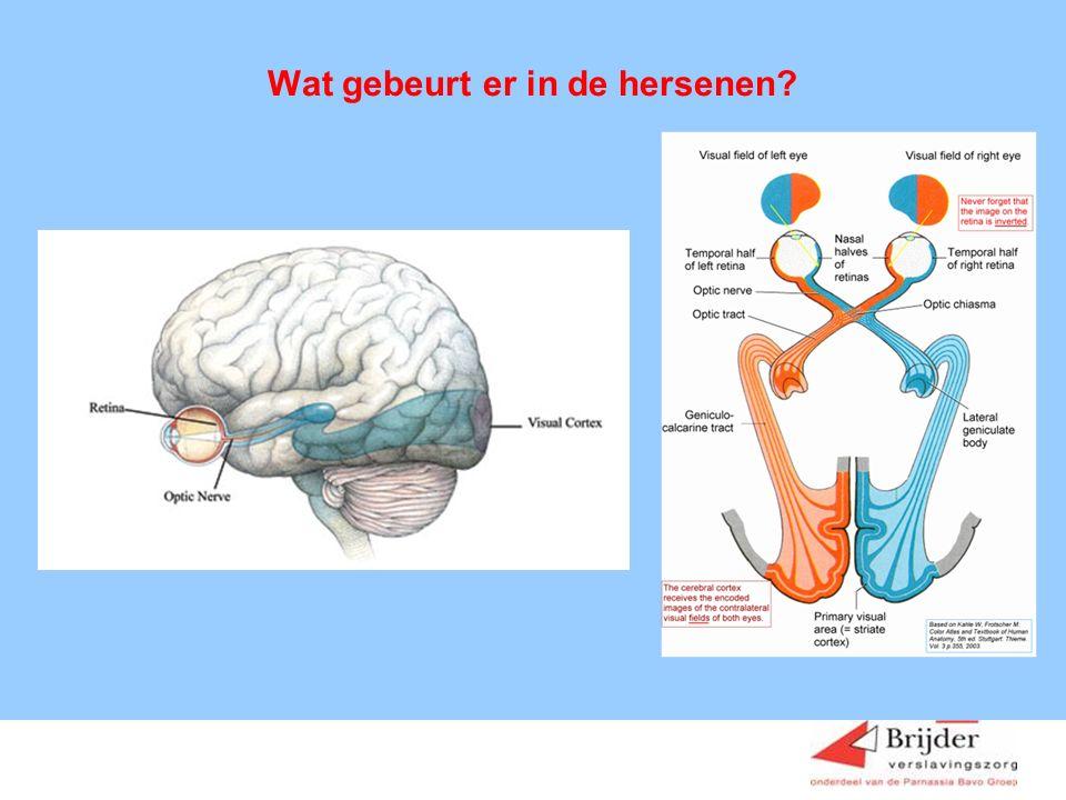 Wat gebeurt er in de hersenen
