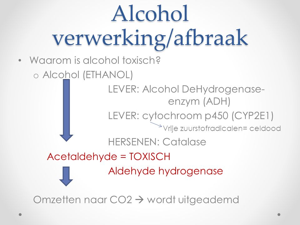 Alcohol verwerking/afbraak