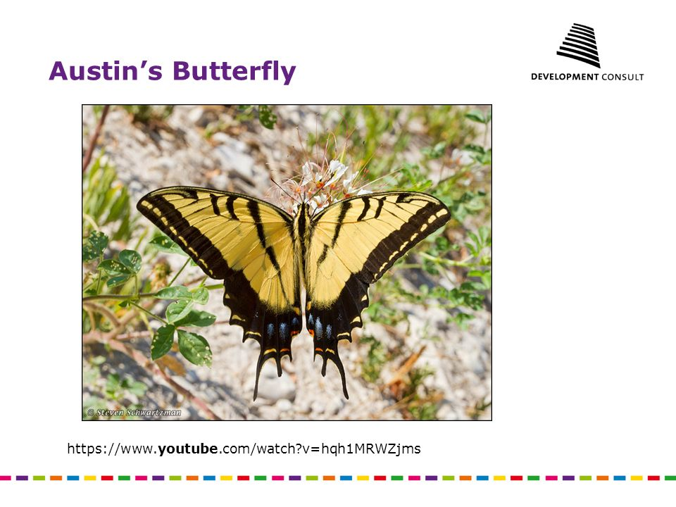 Austin's Butterfly https://www.youtube.com/watch v=hqh1MRWZjms